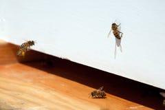 Bi som hem kommer Arkivfoton