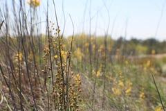 Bi som pollinerar i en granitäng Arkivfoto