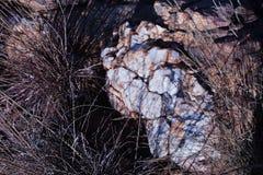 BIAŁA BULSKOP kwarcytu skała Z SUCHĄ trawą fotografia royalty free