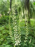 Białe kwiaty na tle zieleni w ogrodzie Royalty Free Stock Photo