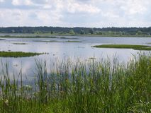 Białowieża National Park (Belarus) stock image