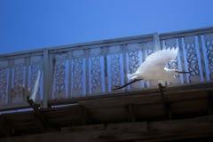 Biały ptak w locie pod molem fotografia royalty free