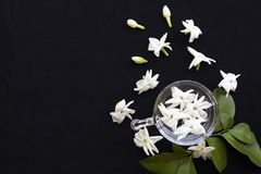 Białych kwiatów flory jaśminowy miejscowy Asia pławik na wodzie obraz royalty free