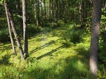 BiaÅ-'owieÅ ¼ ein Nationalpark Weißrussland Lizenzfreie Stockfotos