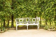 Biała ławka z krzaka tłem Fotografia Royalty Free