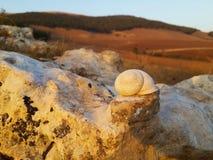 Biała ślimaczek skorupa Fotografia Stock