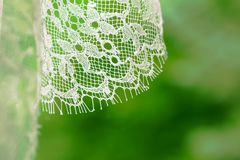 Biała ślub przesłona lub ślubna suknia w zieleni zdjęcia royalty free
