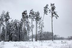 Biała bajka 1 - zima lasu śnieg i krajobraz - obraz royalty free