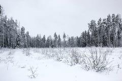 Biała bajka 2 - zima lasu śnieg i krajobraz - obraz stock
