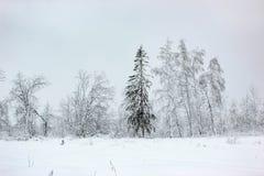 Biała bajka 3 - zima lasu śnieg i krajobraz - zdjęcie royalty free