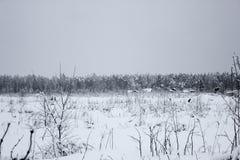 Biała bajka - zima lasu wioska i krajobraz zdjęcia royalty free