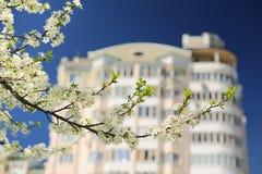 Biała bonkreta kwitnie na gałąź z mieszkania niebieskim niebem i domem Obrazy Stock