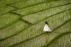Biała bridal suknia z piękną romantyczną młodą kobietą w tarasowatym irlandczyka polu Obraz Royalty Free
