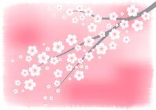 Biała czereśniowego okwitnięcia gałąź na wodnego koloru menchii tle Zdjęcie Royalty Free