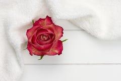 Biała czerwieni róża i ręcznik obraz royalty free