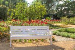 Biała drewniana ławka w kwitnę Zdjęcie Stock