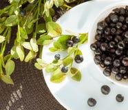 Biała filiżanka z czarną jagodą Obraz Stock
