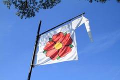 Biała flaga z czerwieni różą Obrazy Royalty Free