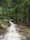Biała gravek ścieżka w drewnie Zdjęcia Stock