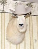 Biała Halnej kózki głowa jest ubranym kowbojskiego kapelusz Zdjęcia Stock