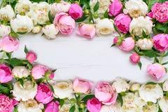 Biała i różowa peoni rama na białym drewnianym tle wakacje Obrazy Stock