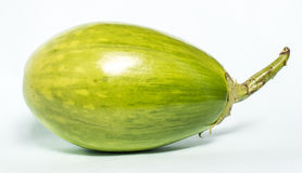 Biała jajeczna roślina Obraz Royalty Free