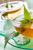 Biała jasnota herbaciana płukanka - Lamium album - Fotografia Royalty Free