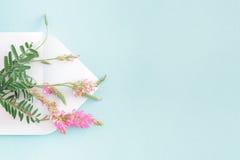 Biała koperta z menchiami kwitnie na błękitnym tle mail ty Obraz Royalty Free