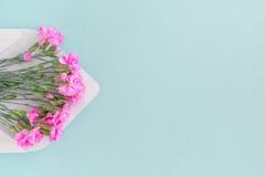 Biała koperta z menchiami kwitnie na błękitnym tle mail ty Obrazy Royalty Free