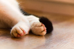 Biała kot łapa obraz stock