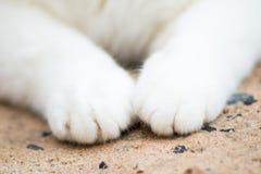 Biała kot łapa, kot stopa Obrazy Stock