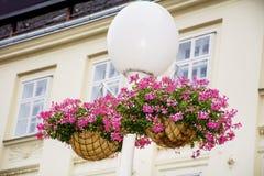 Biała latarnia uliczna z wiszącymi koszami z różowymi bodziszkami Fotografia Stock