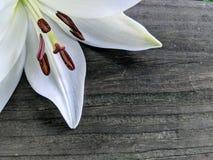 Biała leluja na drewnie fotografia stock