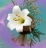 Biała leluja odbijająca w barwionym lustrze Zdjęcia Stock