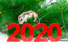 Biała mysz jest symbolem przyszły rok 2020 zdjęcie royalty free