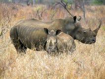 Południowi afrykańscy zwierzęta Obraz Stock