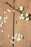 Biała okwitnięcie gałąź na drewnianym tle obraz royalty free