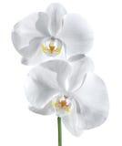 Biała orchidea - wellness pary pojęcie Obrazy Royalty Free