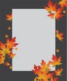 Biała papierowa karta na jesień zawijasa liściach klonowych Obrazy Royalty Free