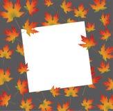 Biała papierowa karta na jesieni backround liściach klonowych Obrazy Stock