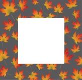 Biała papierowa karta na jesieni backround wyrównywał liście klonowych Zdjęcia Royalty Free