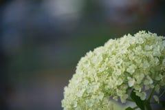 Biała roślinność Obrazy Royalty Free