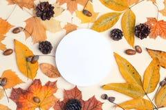 Biała round rama z wysuszonymi jesień liśćmi, rożkami i acorns, dalej obraz stock