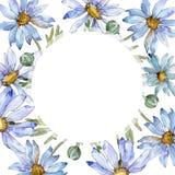 Biała stokrotka Kwiecisty botaniczny kwiat Ramowy rabatowy ornamentu kwadrat royalty ilustracja