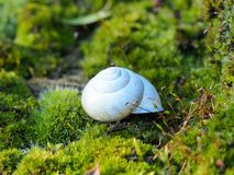 Biała wąż skorupa rozjaśnia w słońcu fotografia stock