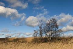 Białe cumulus chmury w niebieskim niebie dniem, naturalny tło, niebo, dzień, chmury, woda, jezioro obrazy royalty free