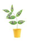 białe drzewo odizolowane pieniądze Zdjęcie Stock