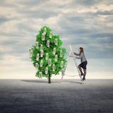 białe drzewo odizolowane pieniądze Obrazy Stock