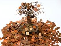 białe drzewo odizolowane pieniądze Fotografia Stock