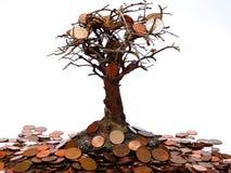 białe drzewo odizolowane pieniądze Zdjęcia Royalty Free